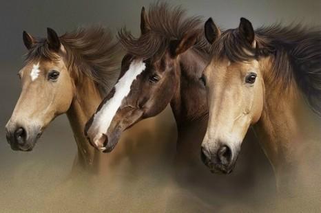 http://www.klkone.estranky.cz/img/original/121/horses.jpg